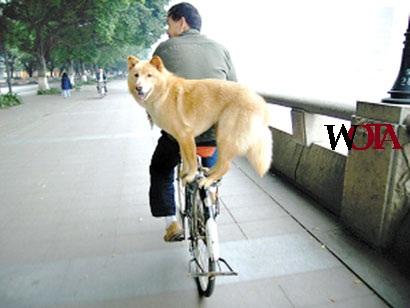 life-balance-bike