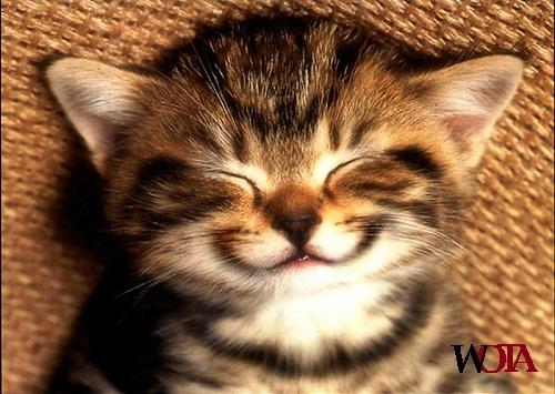 life-smile